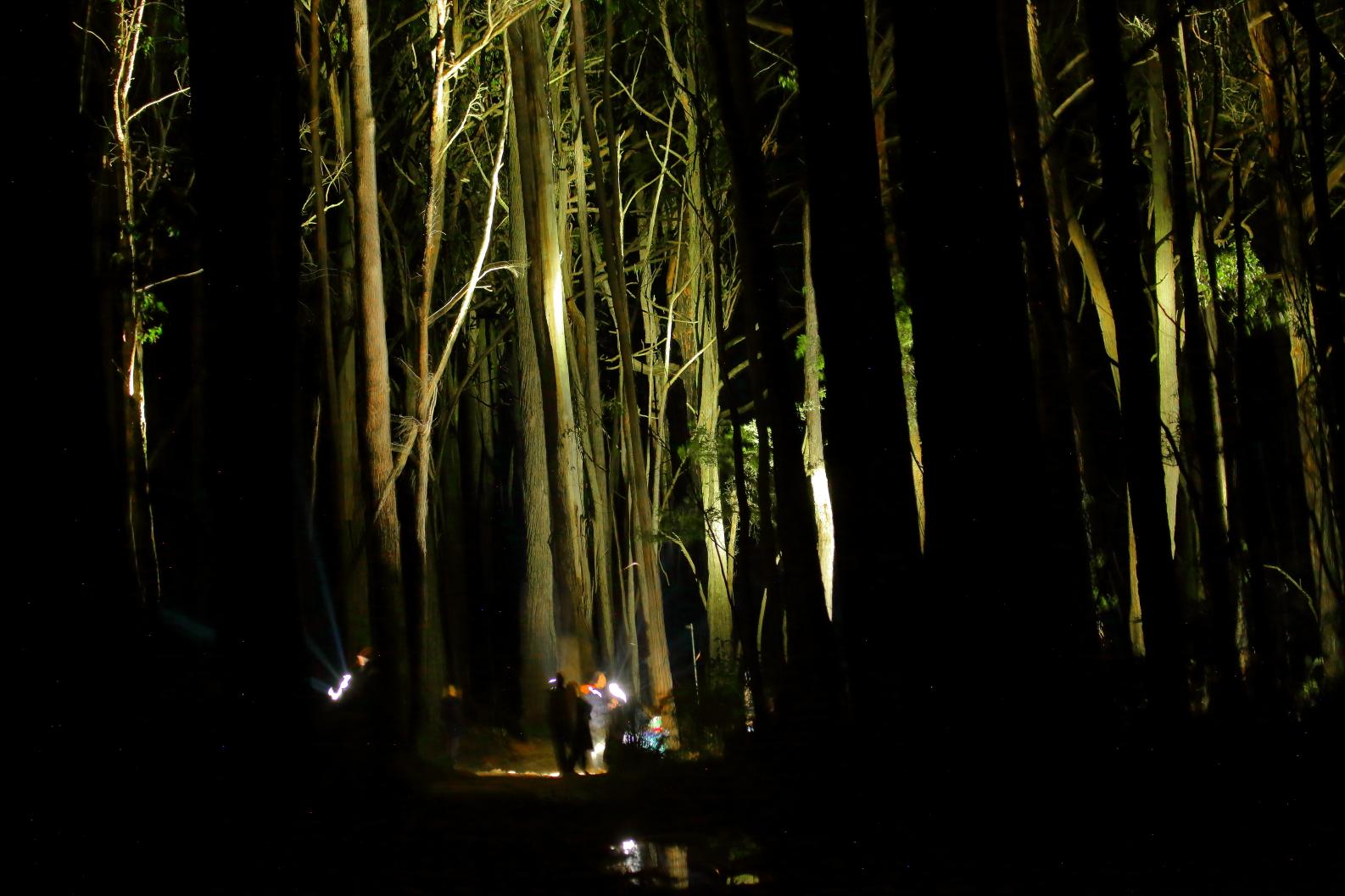 Night Spotlighting